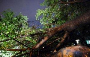 Furtuna a făcut prăpăd în Capitală. Copaci căzuţi pe carosabil și mașini avariate