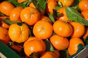 După ce vei citi asta, te vei gândi de două ori înainte să cumperi clementine din supermarket! Ce secrete ascund aceste fructe