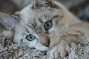 Își căuta pisica de câteva zile, când un vecin a venit să-i arate ceva. Când a văzut, a înghețat. Scena era de nedescris