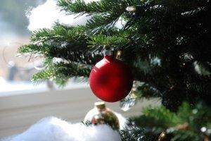 Românii, cuprinși de febra cumpărăturilor. Cât costă un brad de Crăciun
