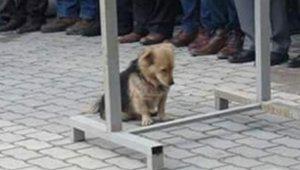 În fiecare zi, câinele lui pleca de acasă pentru câteva ore. Într-o zi, s-a decis să-l urmărească. Când a văzut ce făcea, a izbucnit imediat în lacrimi (GALERIE FOTO)