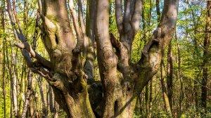 Pădurea care ascunde poarta Iadului se află în România. Ce ciudățenii se petrec în acest loc