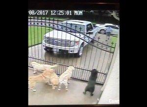 Poștașul venea în fiecare zi la poarta lor, fără să lase nicio scrisoare. Într-o zi, au decis să afle motivul, așa că s-au uitat pe camera de supraveghere. Au fost surprinși când au văzut ce făcea bărbatul (FOTO+VIDEO)