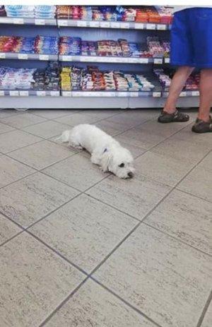 Claudia era într-o benzinărie din Câmpia Turzii, când a văzut ceva ciudat, printre rafturi: O Doamne, nu lasă pe nimeni să se apropie de el FOTO
