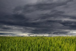 Vreme extremă peste România. Furtuni puternice şi temperaturi de aproape 35 de grade Celsius