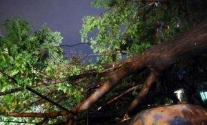 Fenomene meteorologice periculoase în 40 de localităţi din țară. Copaci căzuţi şi maşini avariate, după furtuni