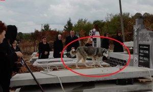 Stăpânul lui a murit, dar câinele fidel nu l-a părăsit nicio clipă. Oamenii plâng când îl văd în preajma mormântului din cimitirul din Satu Mare
