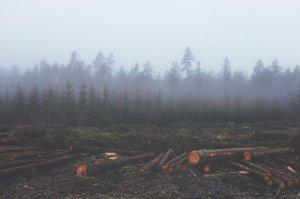 Om ucis de mafia pădurilor. Se cere întrunirea de urgenţă a CSAT
