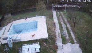 Se uitau pe telefonul mobil la imaginile de pe camera de supraveghere de la casa lor de la țară, când familia din Pitești a văzut ceva de-a dreptul tulburător. Nu-și revin nici acum din șoc!