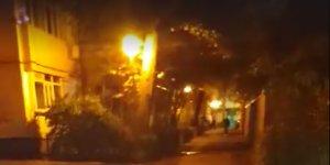 Alin ieșise aseară la o țigară în fața blocului, pe un bulevard din București, când a zărit o creatură stranie venind spre el: E în libertate prin oraș!