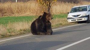 Prima declarație a bărbatului care a spulberat ursul în Harghita